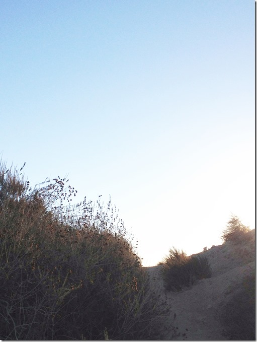 runyon canyon trails 2