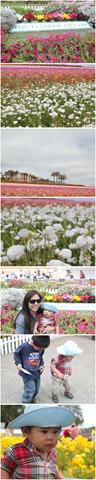 flowerfields_carlsbad.jpg