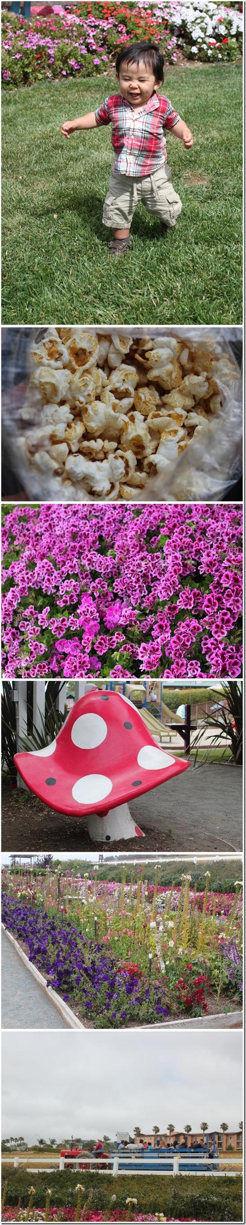 flowerfields_carlsbad2