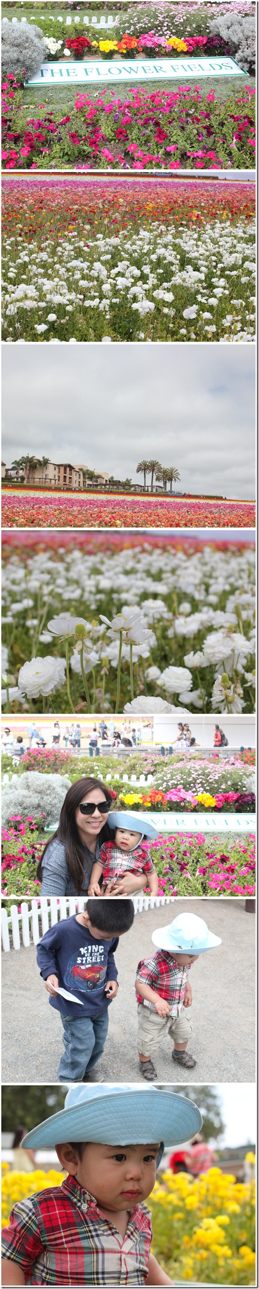 flowerfields_carlsbad