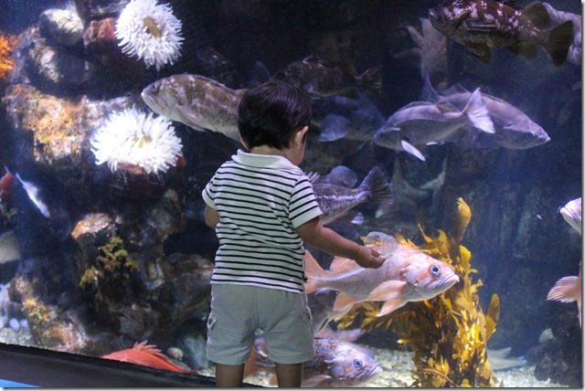 long beach aquarium (10)