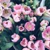tulips-from-Hillcrest-Farmers-Market.jpg