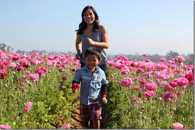 Carlsbad Flower Fields (20)
