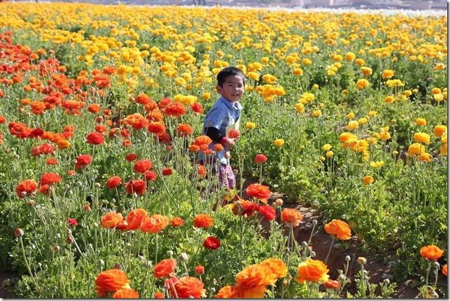 Carlsbad Flower Fields (22)