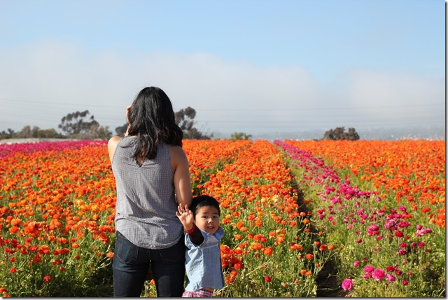 Carlsbad Flower Fields (27)