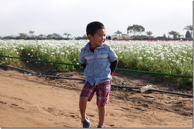 Carlsbad Flower Fields (29)