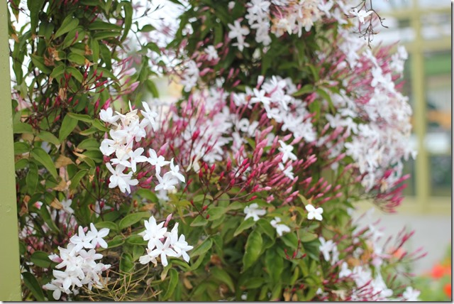 Carlsbad Flower Fields (36)