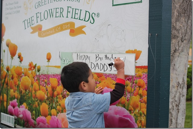 Carlsbad Flower Fields (37)