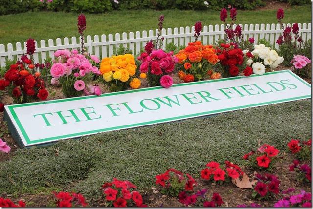 Carlsbad Flower Fields (38)