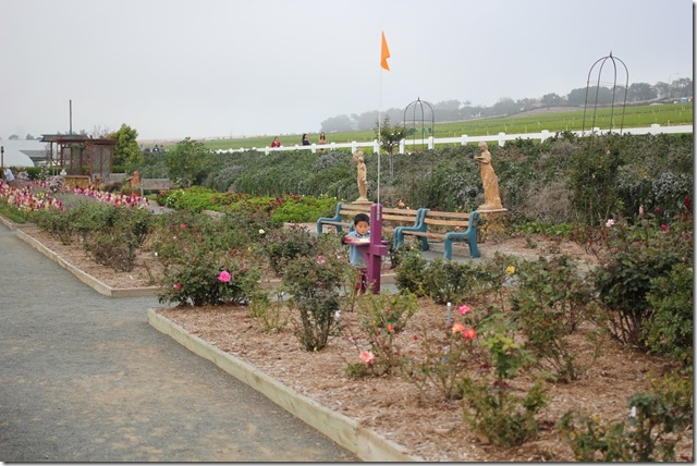 Carlsbad Flower Fields (39)