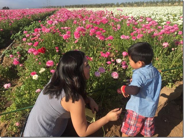 Carlsbad Flower Fields (3)