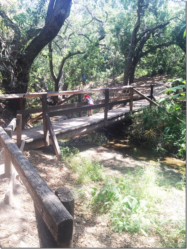 OAK CANYON NATURE HIKE (10)