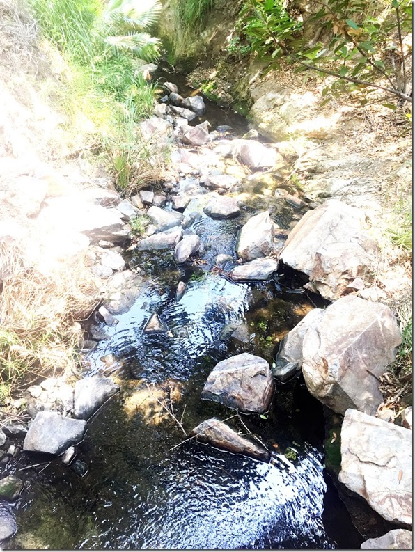 OAK CANYON NATURE HIKE (11)