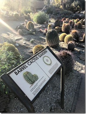 the living desert_palm springs (12)