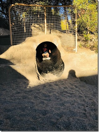the living desert_palm springs (15)