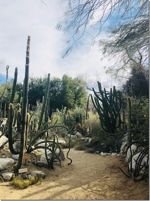 the living desert_palm springs (16)