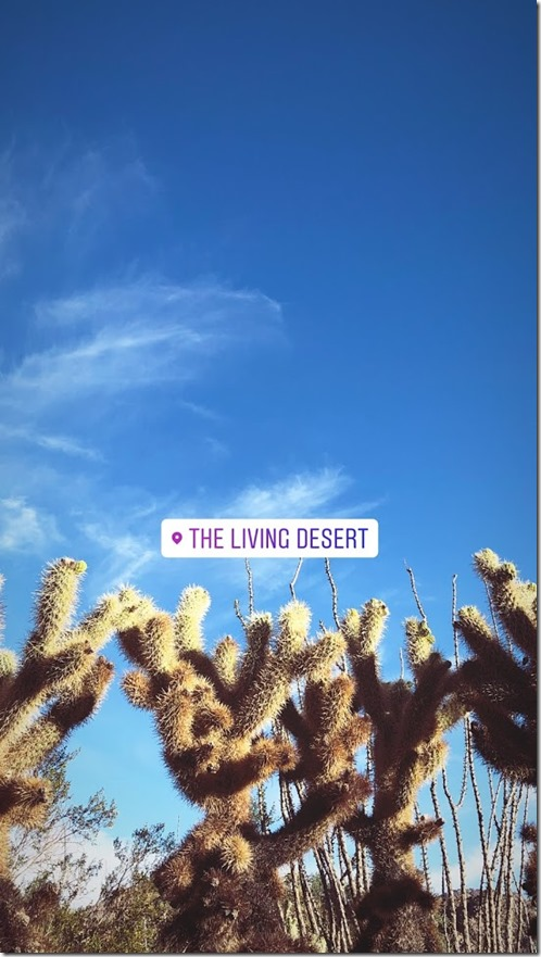 the living desert_palm springs (2)