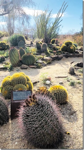 the living desert_palm springs (7)
